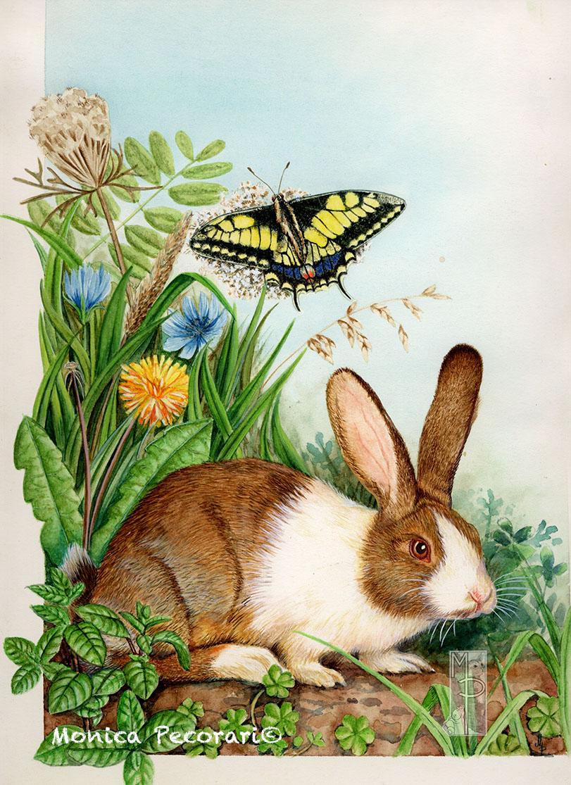 Coniglio e farfalla macaone
