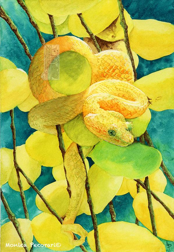 Serpente ttra i frutti della palma da olio