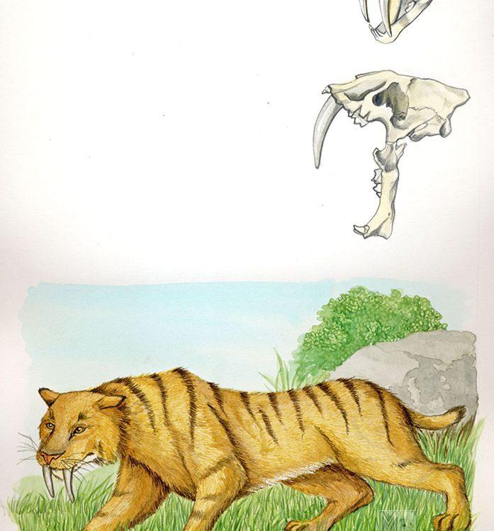 smilodon fatalis; tigre dai denti a sciabola